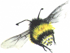 House Cleaning Services and Home Organizing - Bumble Bee Flying away